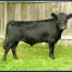 Thumbnail image for The History of Dexter Cattle