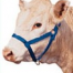 Thumbnail image for Buying a Halter