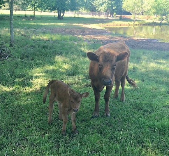 Belle Fourche Beryl Rutherford and baby!